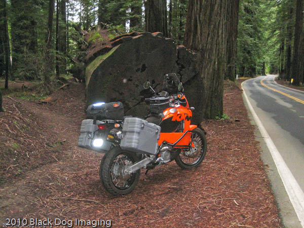 KTM 950 in front of a tree