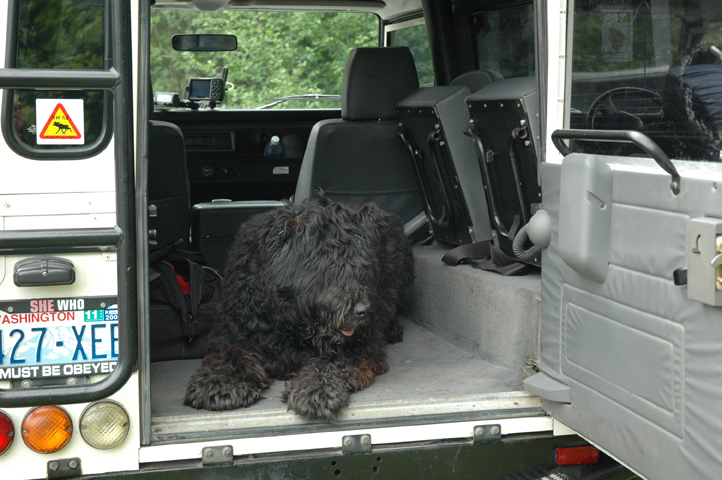 ivan the dog in the back of the defender
