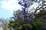 a flowering tree at Vista Hermosa