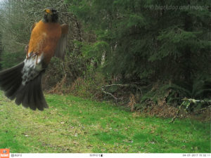 another bird landing on the camera!